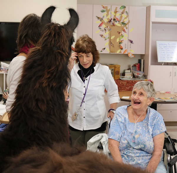 patient with therapy llama