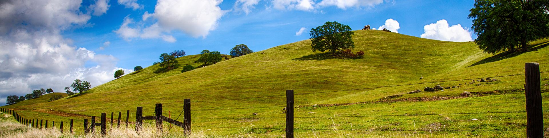 open green hillside of central California